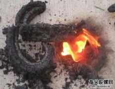 蛇炮法老之蛇你见过吗?